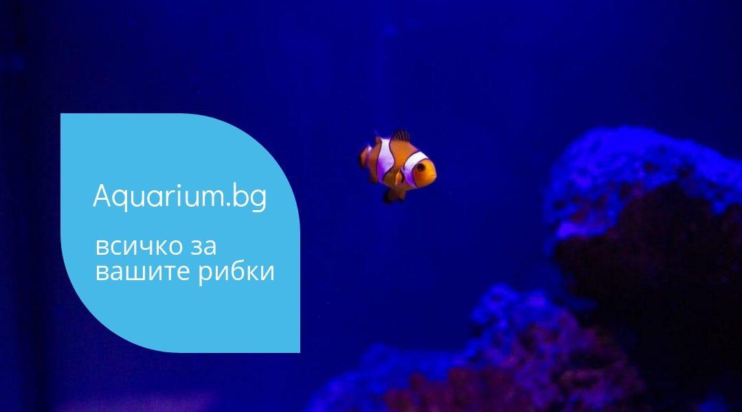 Съвети за почистване на аквариум